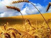 La agroindustria argentina creció 3,7% en los primeros nueve meses de 2009