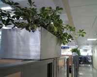 Plantas en la oficina reducen el estrés