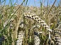 Subsecretaría de Agricultura dará compensaciones